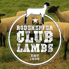 Rodeheffer Club Lambs